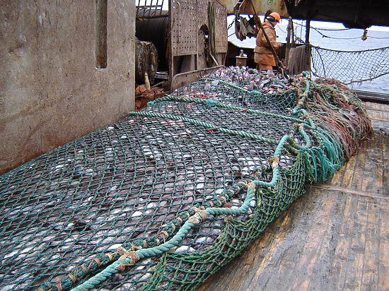 Росрыболовство усовершенствует распределение квот вылова в северных морях